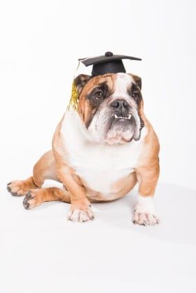 bulldog scholar